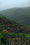 Dhofar escarpment forest
